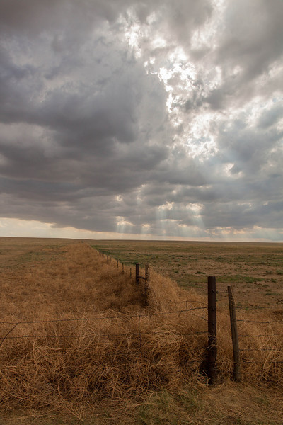 IMAGE: http://ct1co2.smugmug.com/Patricks-Storm-Chasing/Chasecation-2014-/i-WmfXGH6/0/L/Punkin%20Center%20tumbleweeds-L.jpg